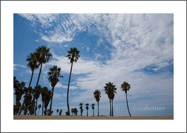 Palm trees reach toward the sky at Venice Beach in California.