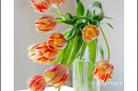A spray of yellow and red tulips seems to reach out of a vase to say hello.