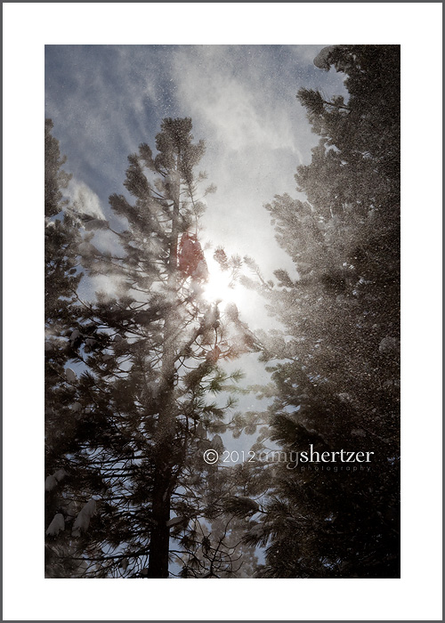 Sunshine glistens while a cloud of snow blows down from pine trees under a blue sky.