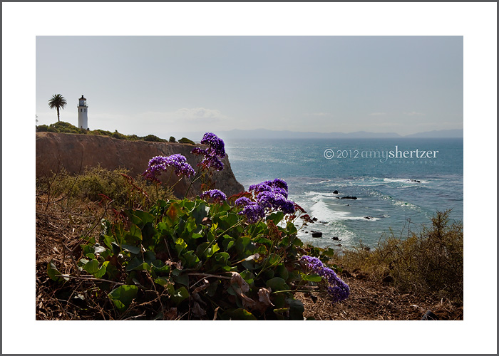 Point Vicente Lighthouse with purple flowers along the cliff and Catalina Island in the distance.